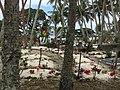 Cimetière île de Maré Nouvelle Calédonie.jpg