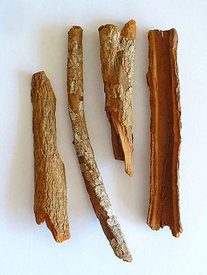 Cinchona - Cinchona officinalis, the harvested bark
