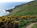 Coast path south of Scabbacombe Head - geograph.org.uk - 1267164.jpg