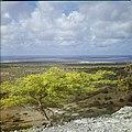 Collectie Nationaal Museum van Wereldculturen TM-20029755 Uitzicht over landschap, met op de achtergrond Klein Bonaire Bonaire Boy Lawson (Fotograaf).jpg