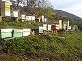 Colmenas de abejas - panoramio.jpg