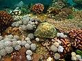 Colorful underwater world, Mabini Batangas - panoramio (8).jpg