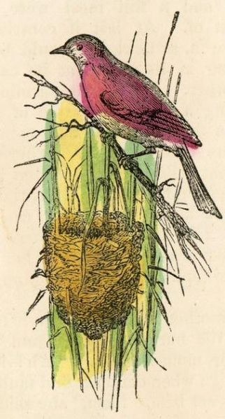 File:Colorized Bird Nest Drawing.jpg