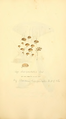 Coloured Figures of English Fungi or Mushrooms - t. 341.png