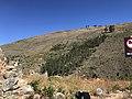 Conjunto de árboles en cerro en Incallajta.jpg
