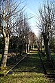 Copped Hall path avenue, Epping, Essex, England 1 - winter.jpg