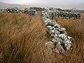 Corlan. Sheepfold. - geograph.org.uk - 394895.jpg