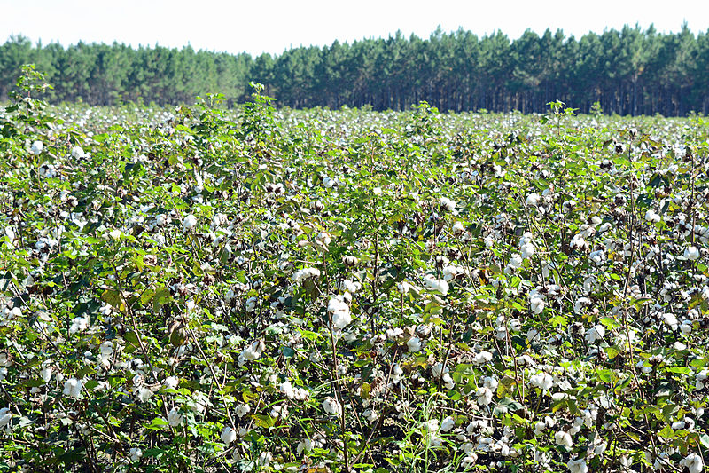cotton county Cotton county, oklahoma: browse thousands of acres of land for sale in cotton county, oklahoma.