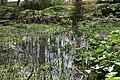Coughton Court bog garden.jpg