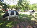 Cows Evolution Park.JPG