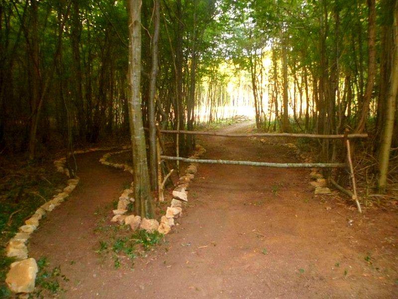 Abri du Gros Bois: création du chemin