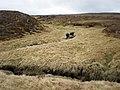 Cròm-allt Mòr forks into tributaries on Carn Ghriogair - geograph.org.uk - 1277299.jpg