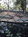 Crocodiles in zoo.jpg