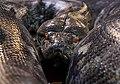 Crocoparc-Pythons-noir.jpg
