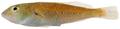 Cryptotomus roseus - pone.0010676.g127.png