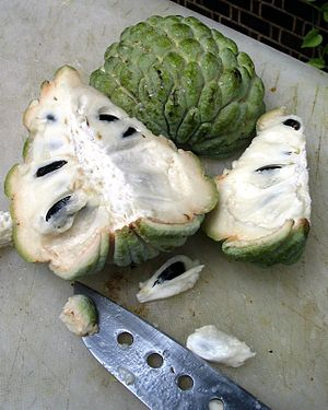 Aggregate fruit - A sugar apple fruit forms from the pistils and receptacle of one flower