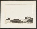 Cystophora proboscidea - 1700-1880 - Print - Iconographia Zoologica - Special Collections University of Amsterdam - UBA01 IZ21100125.tif