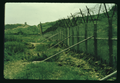 DMZ south boundary fence in paddy, August 1968.png