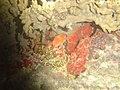 DSC00208 - recifes de coral - Naufrágio e recifes de coral no Nilo.jpg