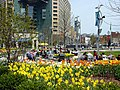 Daffodils in Downtown Detroit.jpg