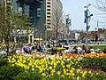 Daffodils in Downtown Detroit.jpg
