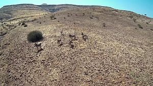 Damaraland - Rugged Landscape of Damaraland