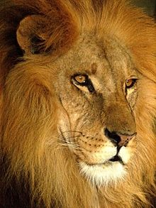 Darica Lion 07168.jpg