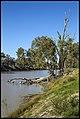 Darling River River Gums-1 (21364864535).jpg
