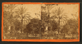 Date tree in Dr. Peck's garden. St.Augustine, Fla, from Robert N. Dennis collection of stereoscopic views.png