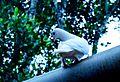 Dazzling Dove.jpg