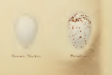 Two eggs, left is pure white, right is white with brown flecking