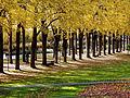 Der Bad Mergentheimer Kurpark im Herbst. 14.jpg