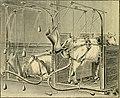 Der harn - sowie die übrigen ausscheidungen und körperflüssigkeiten von mensch und tier, ihre untersuchung und zusammensetzung in normalem und pathologischem zustande; ein handbuch für ärzte, (14786102913).jpg