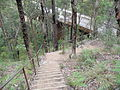 Descent from Siding Lookout to viaduct.JPG