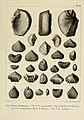 Description des mollusques fossiles qui se trouvent dans les grès verts des environs de Genève (9522638787).jpg