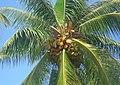Diamond Head - Kapahulu - St. Louis, Honolulu, HI, USA - panoramio (14).jpg