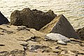 Dienvidu mols - the South pier, Liepāja - panoramio (3).jpg