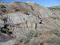 Dinosaur Provincial Park - panoramio - ChrisStubbs.jpg
