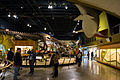 Dinosaur hall 02 - Cleveland Museum of Natural History - 2014-12-26 (20508728893).jpg
