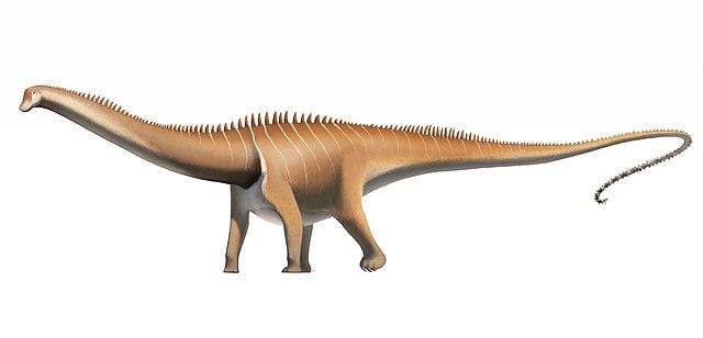 640px-Diplodocus_carnegii.jpg