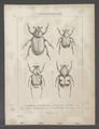 Diversen - Print - Iconographia Zoologica - Special Collections University of Amsterdam - UBAINV0274 022 08 0002.tif