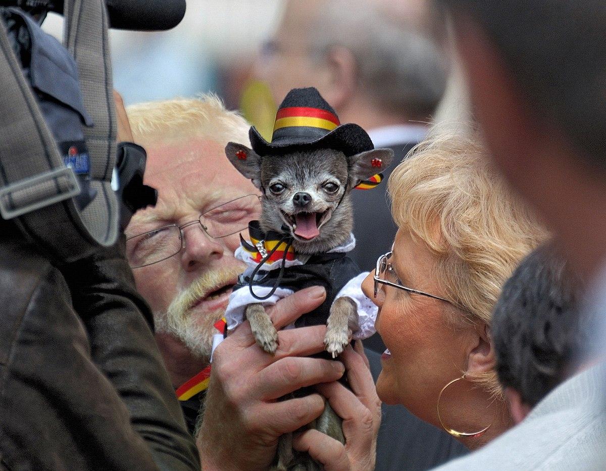 Canine Fashion Designer