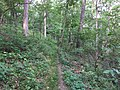Dogwood Ridge Trail Forest 44 2018 1.jpg