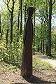Dortmund - Rombergpark 09 ies.jpg