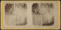 Drapery of ice, Kauterskill Falls, by E. & H.T. Anthony (Firm).png