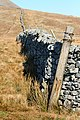 Dry Stone Wall on Brunt Riggs - geograph.org.uk - 701298.jpg