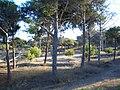 Dunas de Guardamar - panoramio - Eduardo Manchon (2).jpg