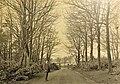 Dunlop House driveway, East Ayrshire, Scotland.jpg