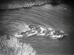 ETH-BIB-Elefantenherde durchschwimmt den Nil (aus 10 m Höhe aufgenommen)-Kilimanjaroflug 1929-30-LBS MH02-07-0056.tif