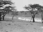 ETH-BIB-Zebraherden an einer Wasserstelle-Kilimanjaroflug 1929-30-LBS MH02-07-0069.tif